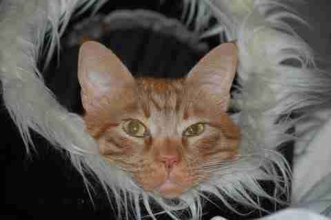 What do cats think 1 jamesjohnwrites.com