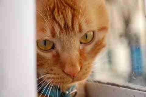 what do cats think jamesjohnwrites.com